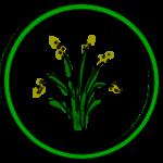 NEXUS Center USP illustratie 'Ecologic'